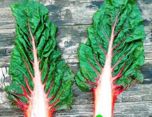 Alternativ nachhaltig solidarisch – Konzepte einer anderen Landwirtschaft 5.11. 2020