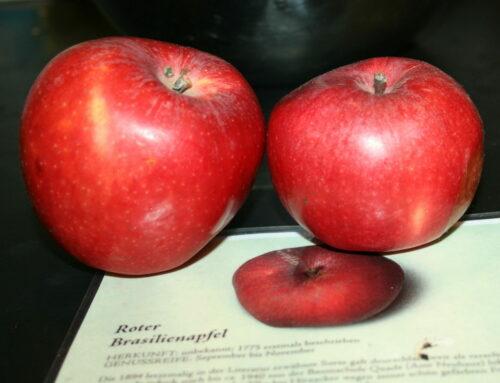 Datenbank des BUND Lemgo hilft bei Recherchen zu alten Obstsorten